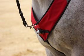 HORSELIGHT Pferdebeleuchtung Pferdeleuchte Reitlicht Basis Starter Set NS
