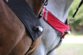 HORSELIGHT Pferdebeleuchtung Pferdeleuchte Reitlicht Standard Set NS
